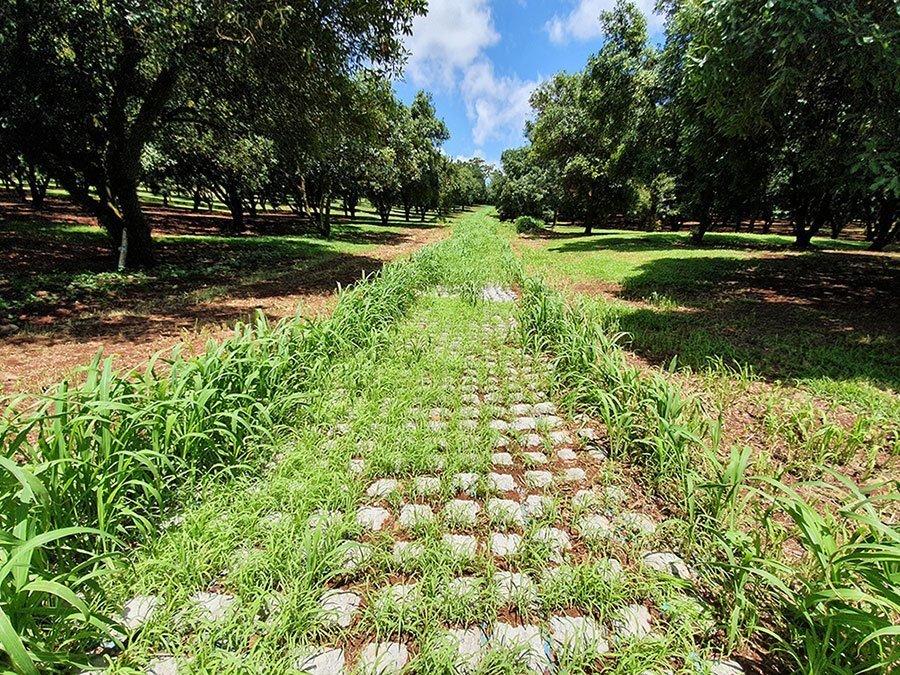 Orchard Drain at Alstonvale NSW – 0100.B